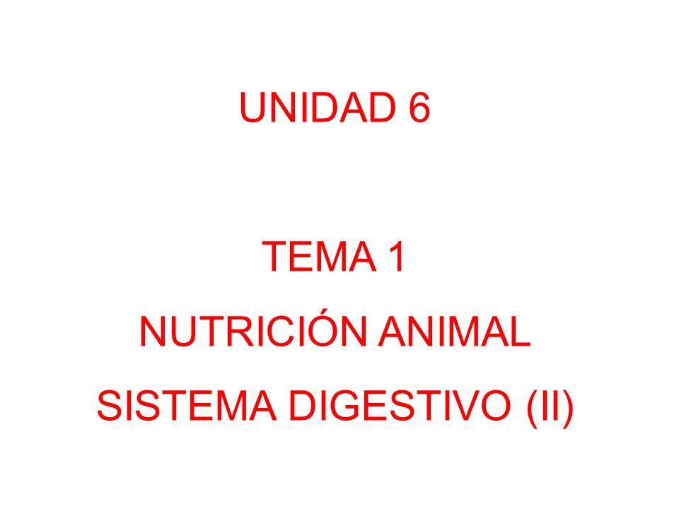 UNIDAD 6 TEMA 1 NUTRICIÓN ANIMAL SISTEMA DIGESTIVO (II)