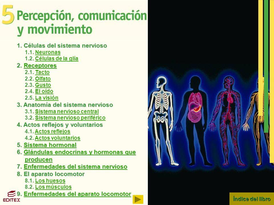Índice del libro Índice del libro 1. Células del sistema nervioso 1.1. NeuronasNeuronas 1.2. Células de la glíaCélulas de la glía 2. Receptores Recept