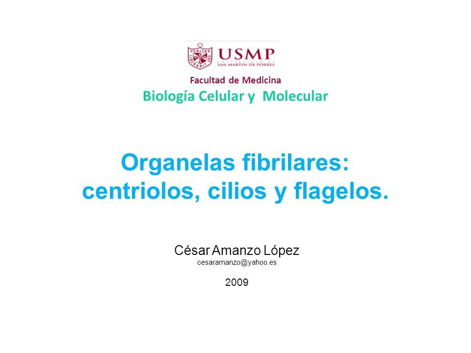 Facultad de Medicina Biología Celular y Molecular Organelas fibrilares: centriolos, cilios y flagelos. César Amanzo López cesaramanzo@yahoo.es 2009