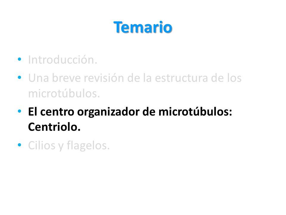 Temario Introducción. Una breve revisión de la estructura de los microtúbulos. El centro organizador de microtúbulos: Centriolo. Cilios y flagelos.