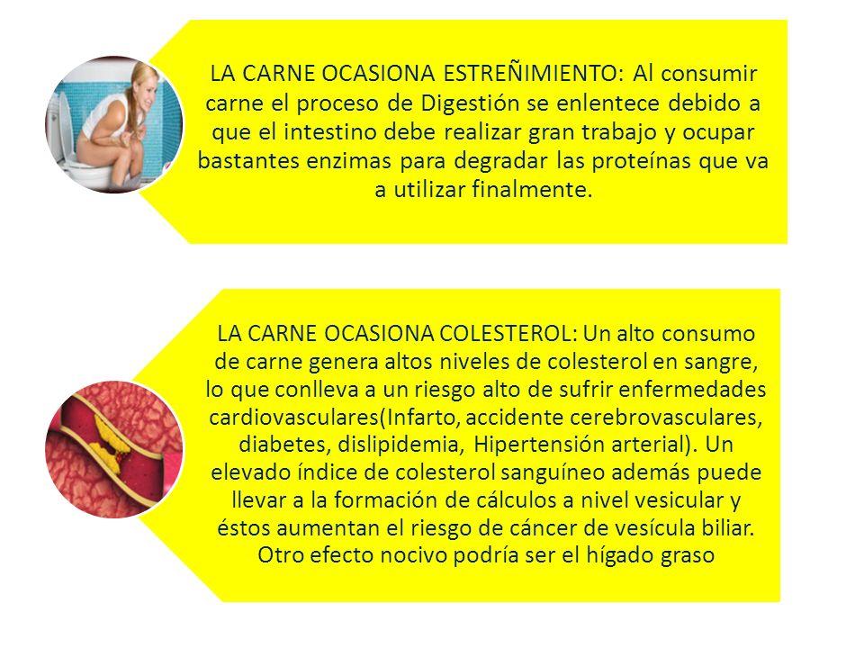 LA CARNE OCASIONA ESTREÑIMIENTO: Al consumir carne el proceso de Digestión se enlentece debido a que el intestino debe realizar gran trabajo y ocupar