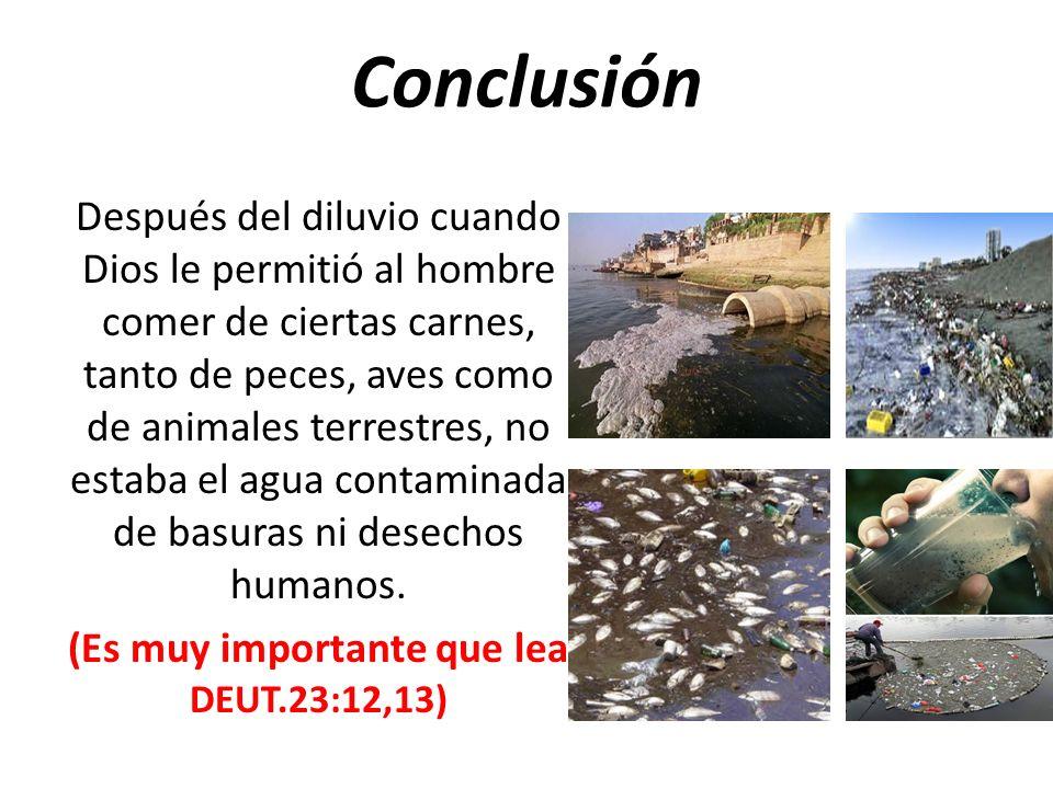 Conclusión Después del diluvio cuando Dios le permitió al hombre comer de ciertas carnes, tanto de peces, aves como de animales terrestres, no estaba el agua contaminada de basuras ni desechos humanos.