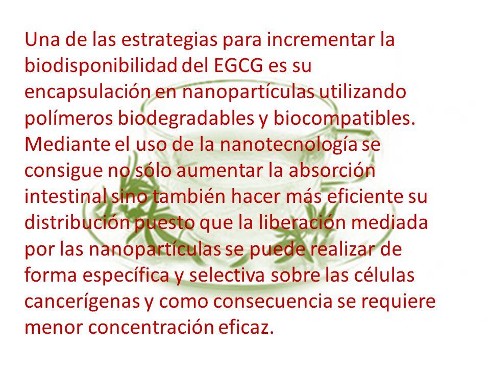 Una de las estrategias para incrementar la biodisponibilidad del EGCG es su encapsulación en nanopartículas utilizando polímeros biodegradables y bioc