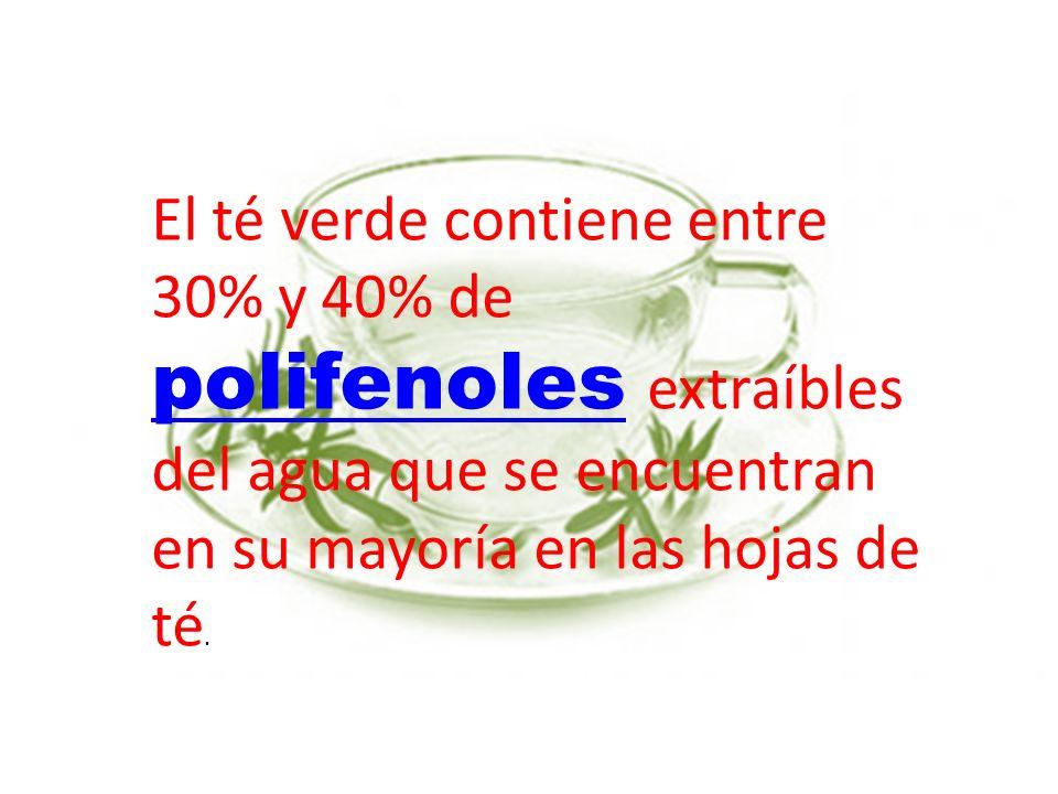 El té verde contiene entre 30% y 40% de polifenoles extraíbles del agua que se encuentran en su mayoría en las hojas de té. polifenoles