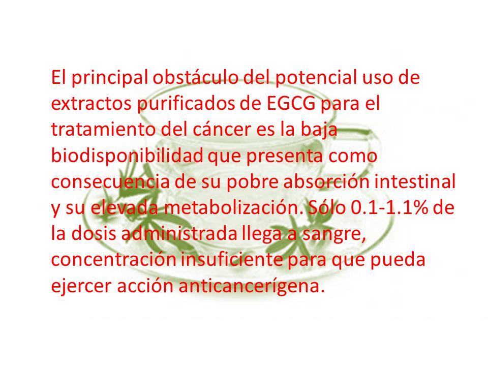 El principal obstáculo del potencial uso de extractos purificados de EGCG para el tratamiento del cáncer es la baja biodisponibilidad que presenta com