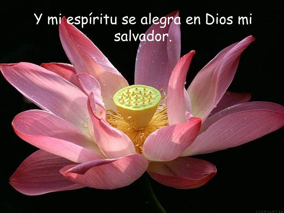 Con María, decimos: Alaba mi alma, la grandeza del Señor…