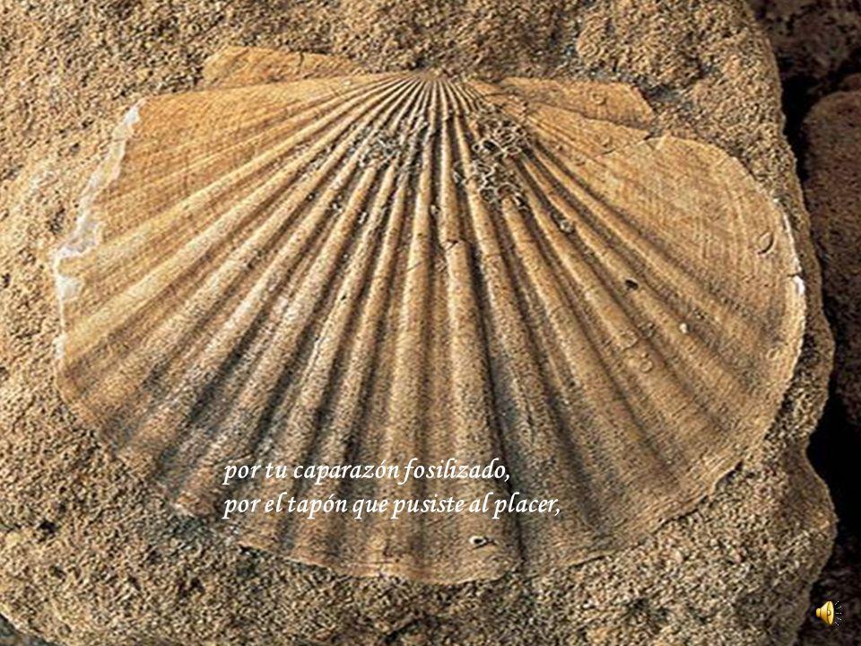 por tu caparazón fosilizado, por el tapón que pusiste al placer,