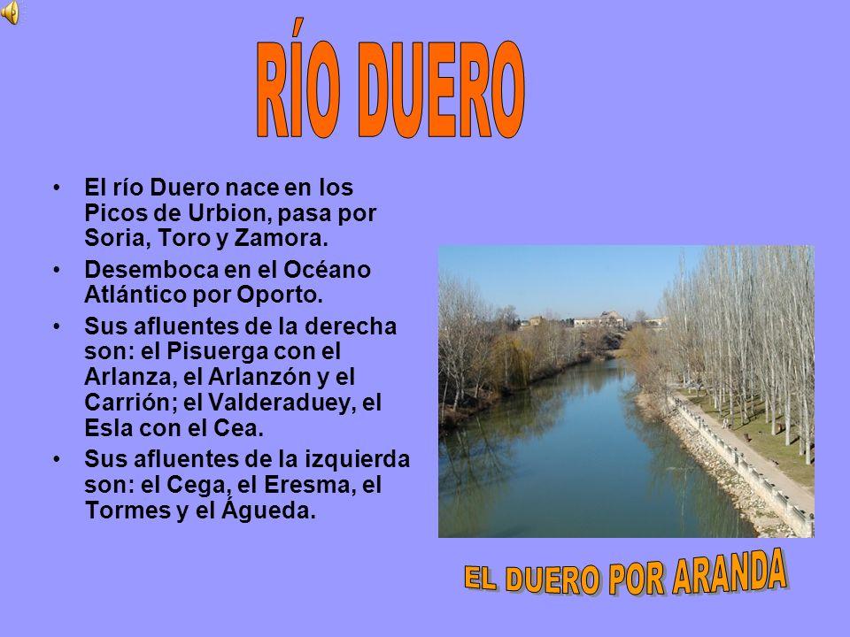 El río Duero nace en los Picos de Urbion, pasa por Soria, Toro y Zamora. Desemboca en el Océano Atlántico por Oporto. Sus afluentes de la derecha son: