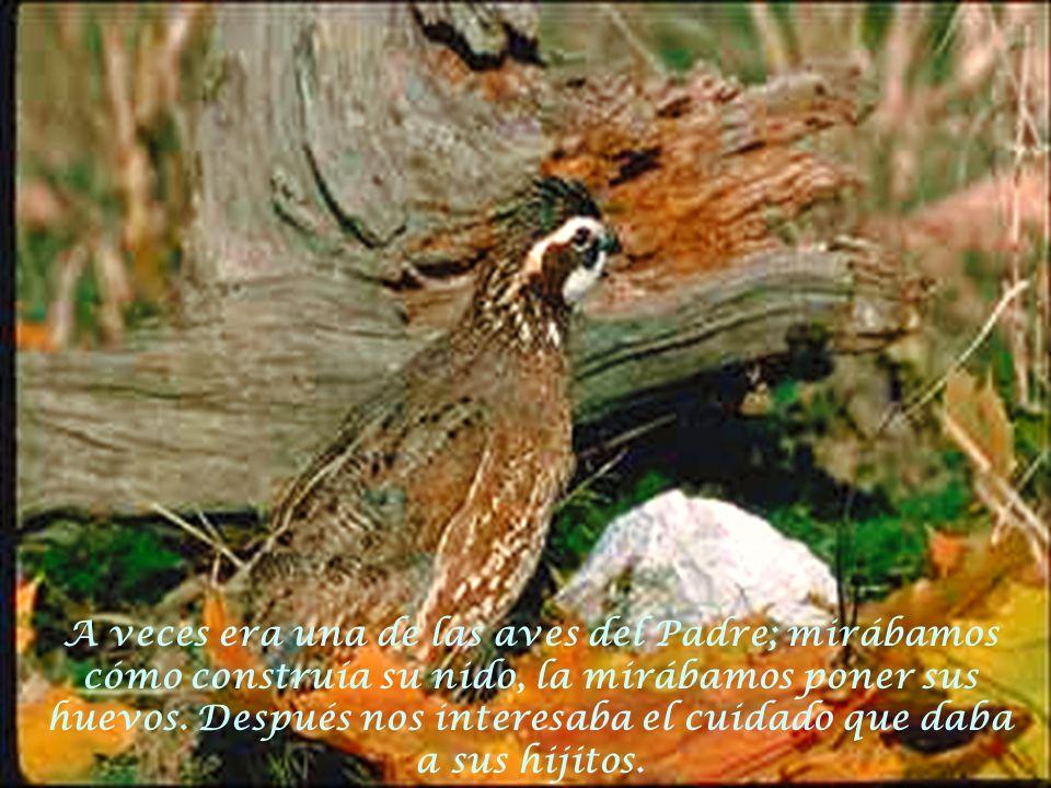 A veces era una de las aves del Padre; mirábamos cómo construía su nido, la mirábamos poner sus huevos.