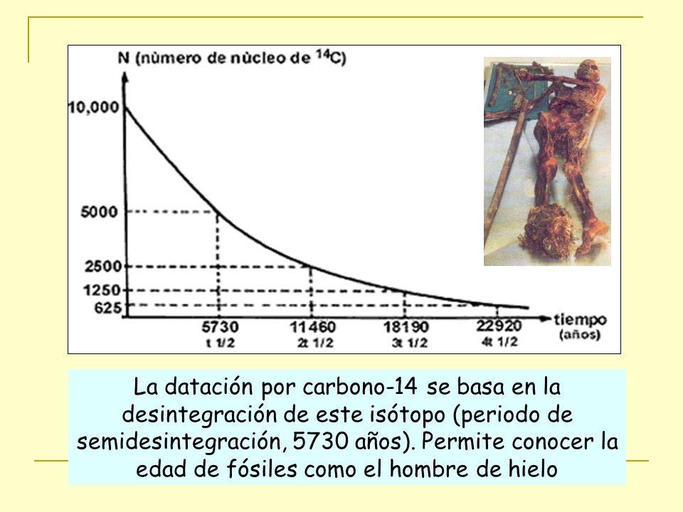 La datación por carbono-14 se basa en la desintegración de este isótopo (periodo de semidesintegración, 5730 años). Permite conocer la edad de fósiles