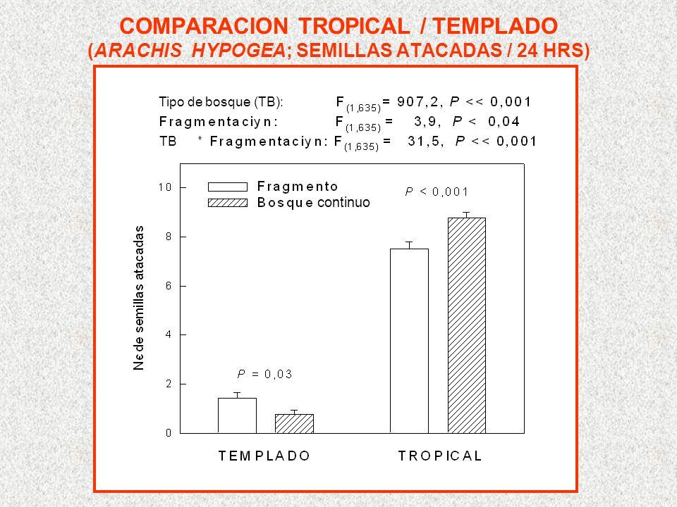 COMPARACION TROPICAL / TEMPLADO (ARACHIS HYPOGEA; SEMILLAS ATACADAS / 24 HRS) Tipo de bosque (TB): TB continuo