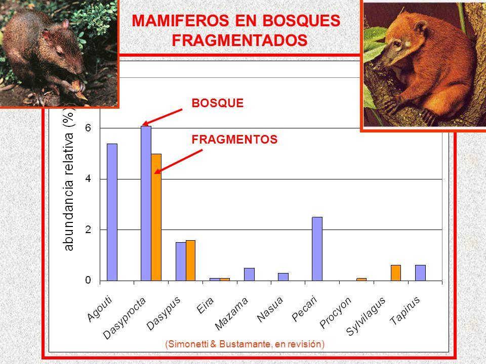 MAMIFEROS EN BOSQUES FRAGMENTADOS BOSQUE FRAGMENTOS (Simonetti & Bustamante, en revisión)