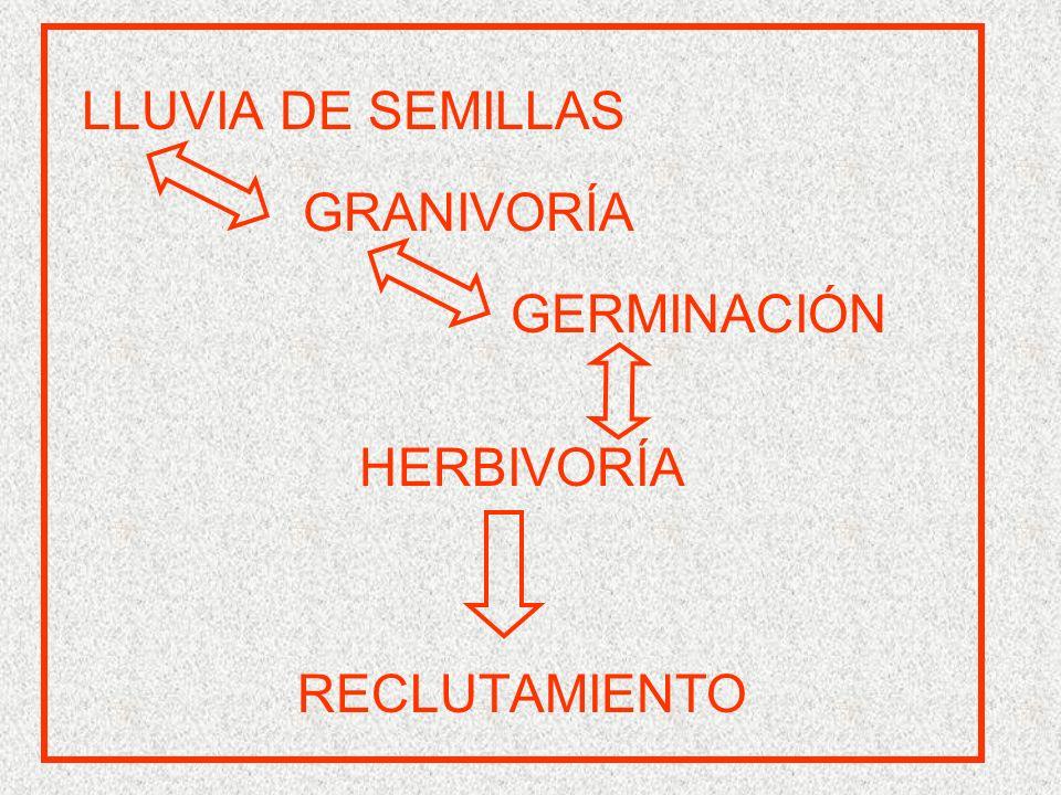 LLUVIA DE SEMILLAS GRANIVORÍA GERMINACIÓN HERBIVORÍA RECLUTAMIENTO