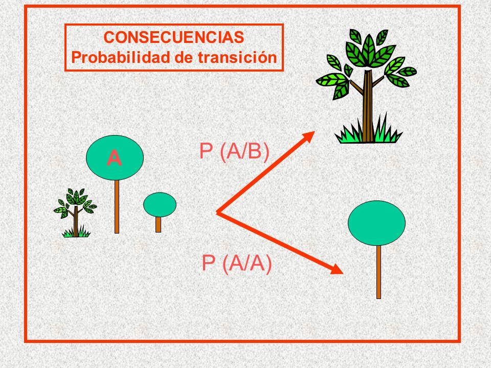 A CONSECUENCIAS Probabilidad de transición P (A/A) P (A/B)