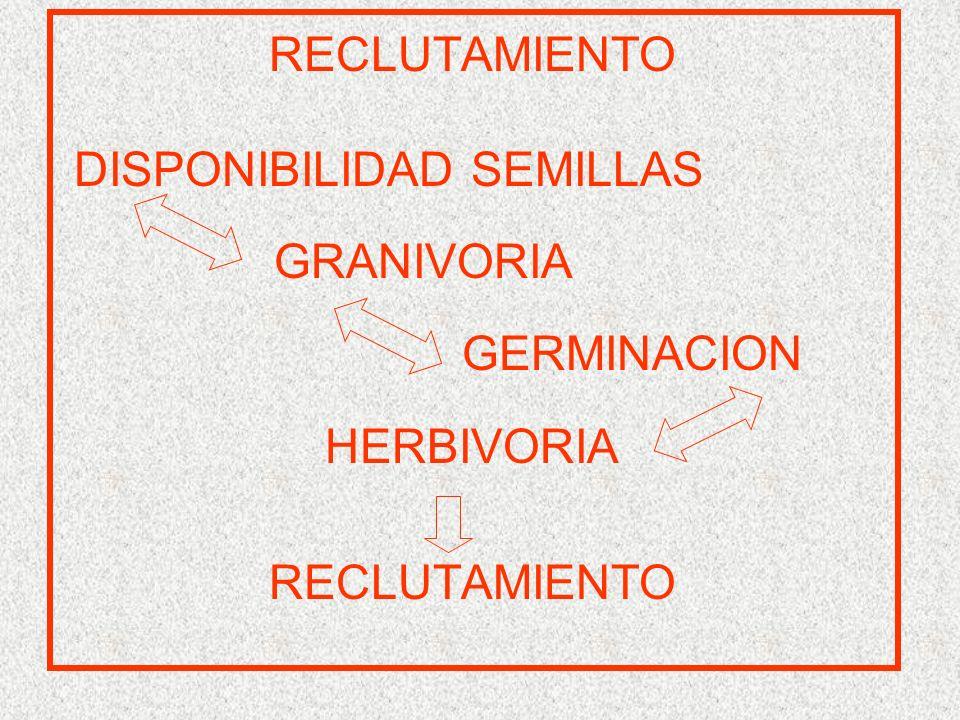 RECLUTAMIENTO DISPONIBILIDAD SEMILLAS GRANIVORIA GERMINACION HERBIVORIA RECLUTAMIENTO