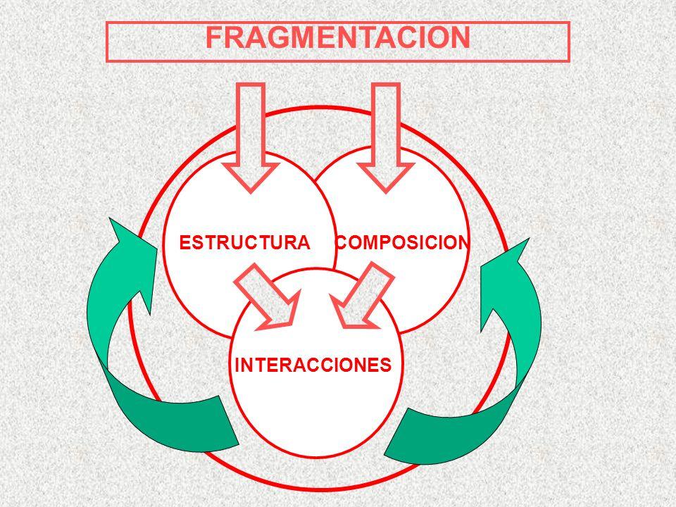FRAGMENTACION ESTRUCTURACOMPOSICION INTERACCIONES