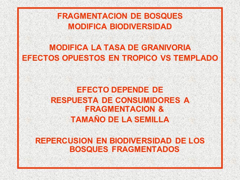 FRAGMENTACION DE BOSQUES MODIFICA BIODIVERSIDAD MODIFICA LA TASA DE GRANIVORIA EFECTOS OPUESTOS EN TROPICO VS TEMPLADO EFECTO DEPENDE DE RESPUESTA DE CONSUMIDORES A FRAGMENTACION & TAMAÑO DE LA SEMILLA REPERCUSION EN BIODIVERSIDAD DE LOS BOSQUES FRAGMENTADOS