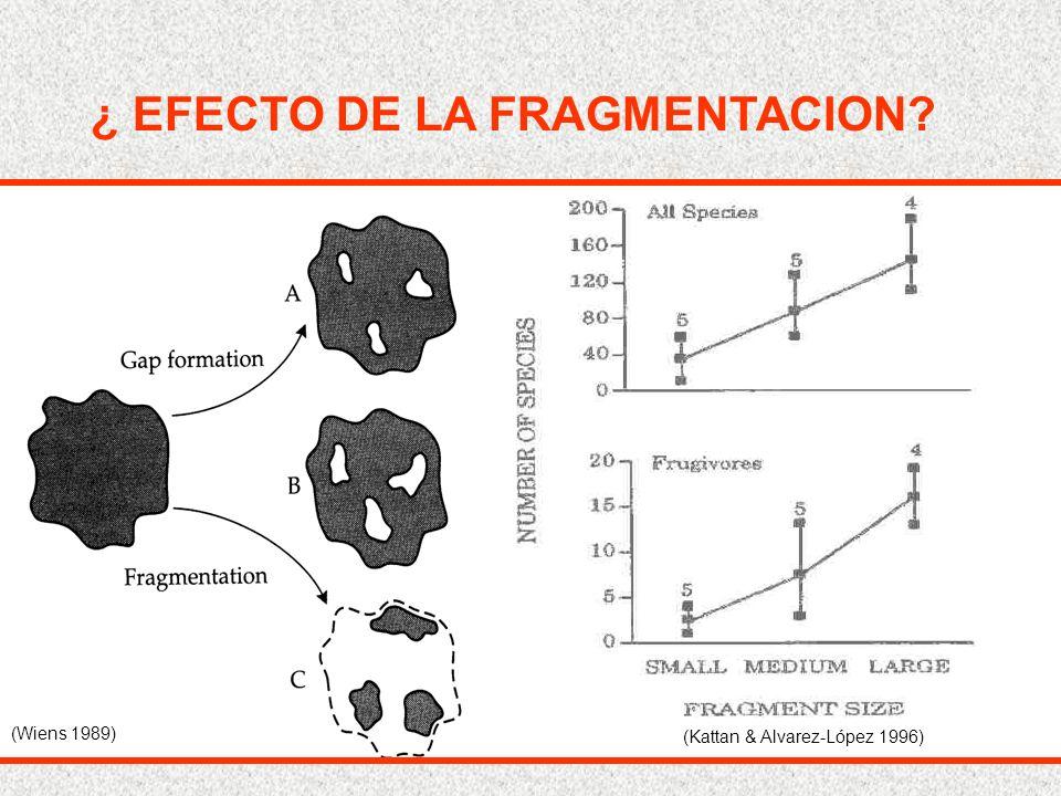 (Wiens 1989) (Kattan & Alvarez-López 1996) ¿ EFECTO DE LA FRAGMENTACION?