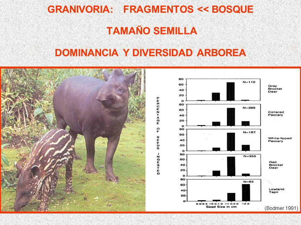 GRANIVORIA: FRAGMENTOS << BOSQUE TAMAÑO SEMILLA DOMINANCIA Y DIVERSIDAD ARBOREA (Bodmer 1991)