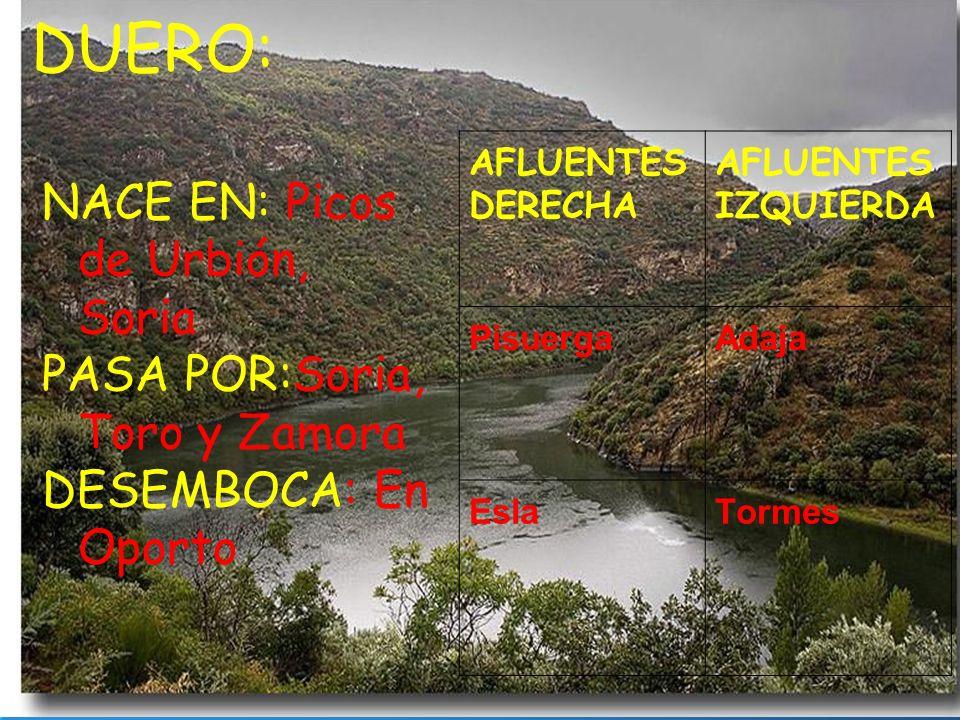 NACE EN: Picos de Urbión, Soria PASA POR:Soria, Toro y Zamora DESEMBOCA: En Oporto AFLUENTES DERECHA AFLUENTES IZQUIERDA PisuergaAdaja EslaTormes DUER