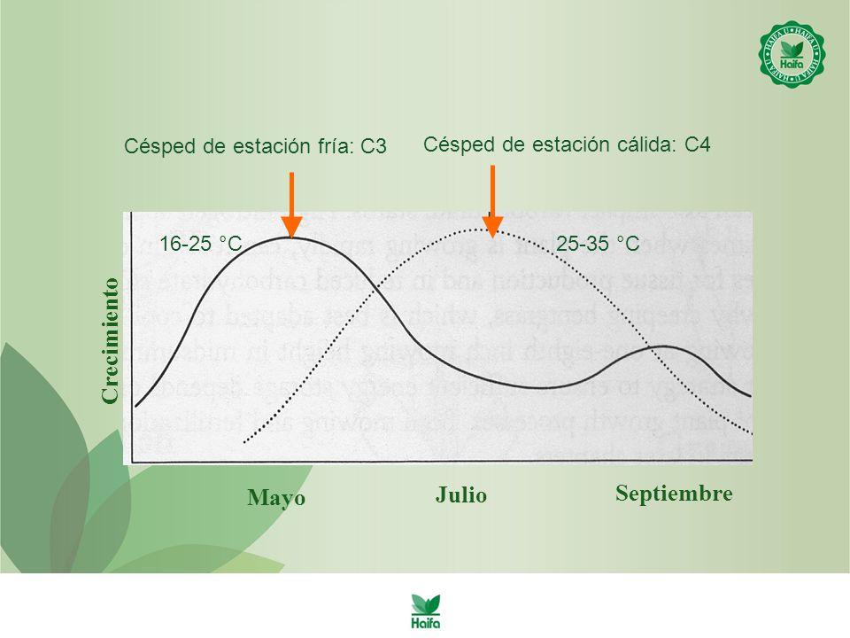 Mayo Septiembre Crecimiento Julio Césped de estación fría: C3 25-35 °C16-25 °C Césped de estación cálida: C4