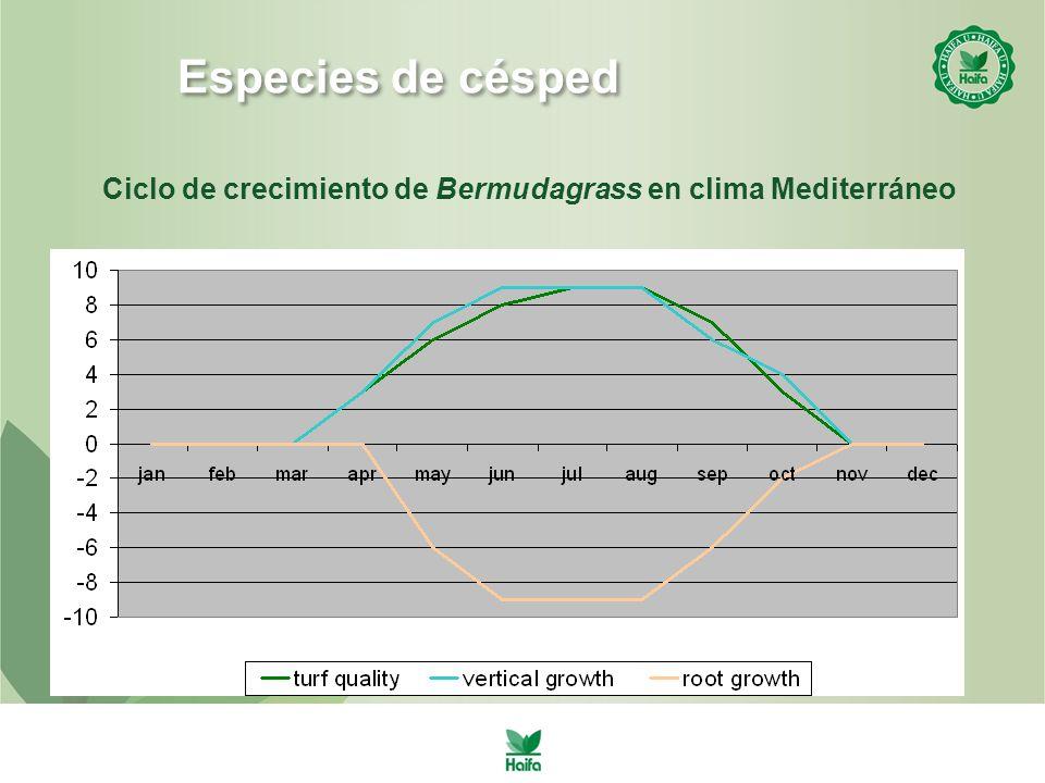 Ciclo de crecimiento de Bermudagrass en clima Mediterráneo Especies de césped