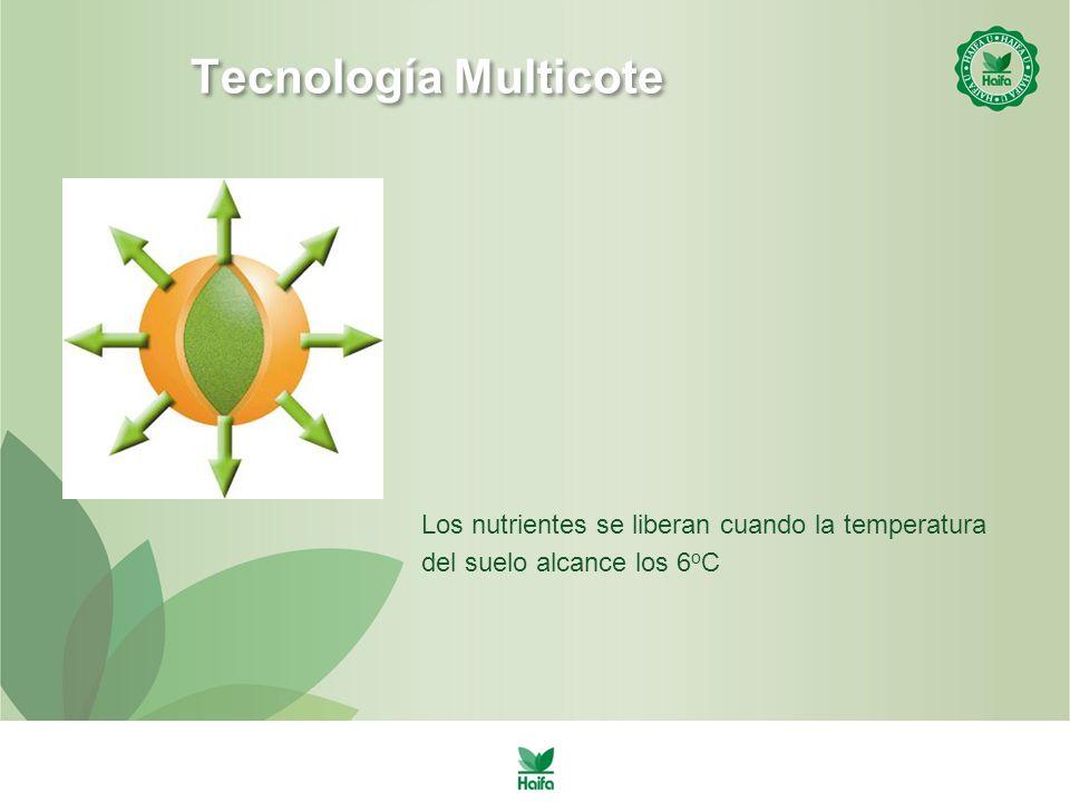 Tecnología Multicote Los nutrientes se liberan cuando la temperatura del suelo alcance los 6 o C