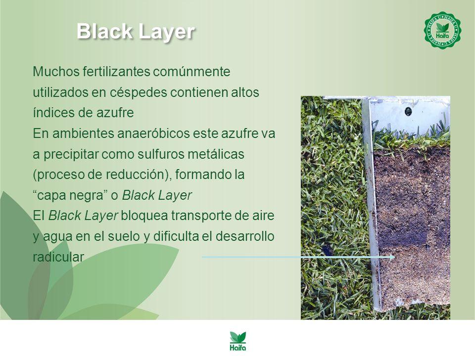 Black Layer Muchos fertilizantes comúnmente utilizados en céspedes contienen altos índices de azufre En ambientes anaeróbicos este azufre va a precipitar como sulfuros metálicas (proceso de reducción), formando la capa negra o Black Layer El Black Layer bloquea transporte de aire y agua en el suelo y dificulta el desarrollo radicular