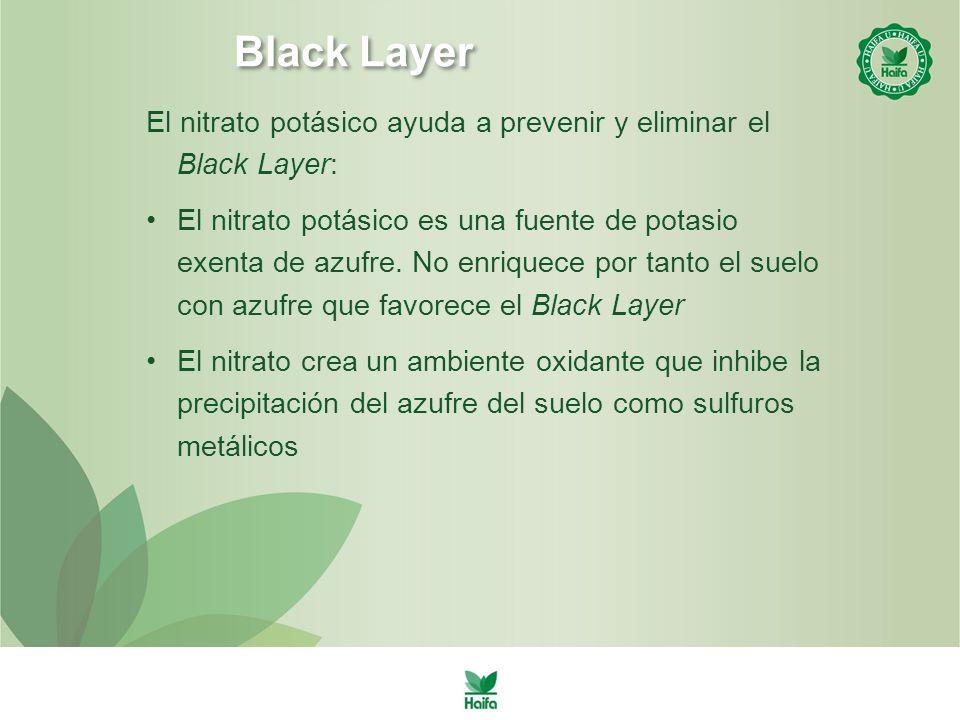 Black Layer El nitrato potásico ayuda a prevenir y eliminar el Black Layer: El nitrato potásico es una fuente de potasio exenta de azufre.