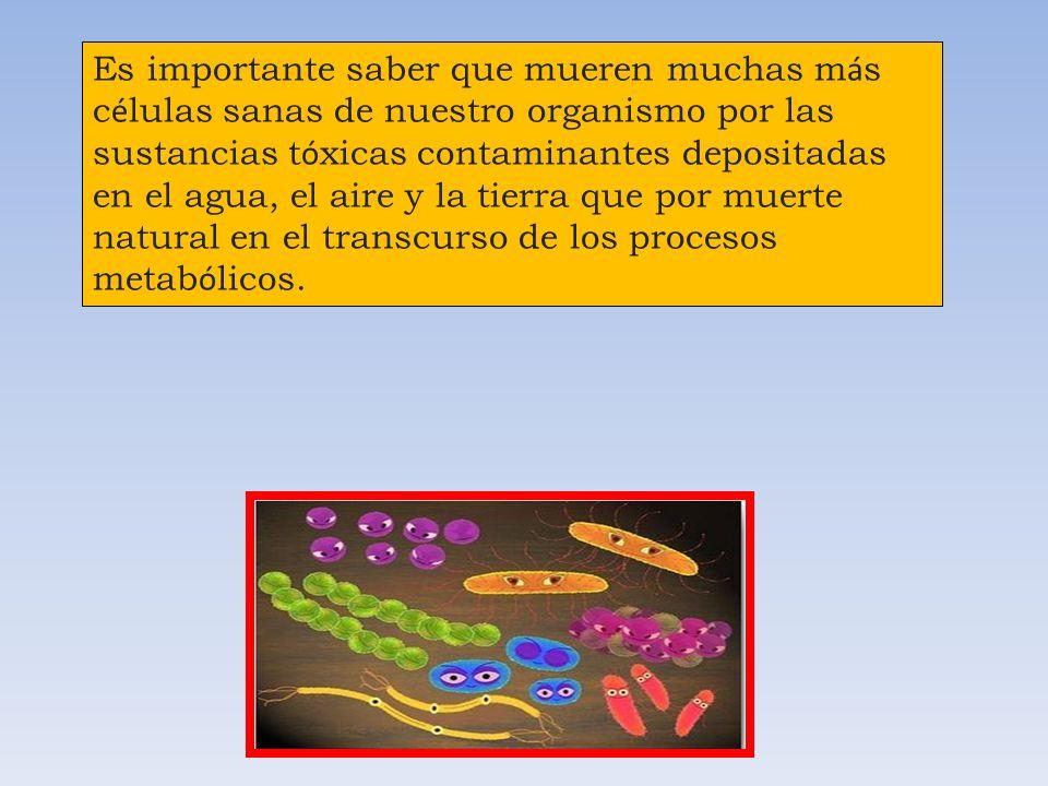 Favorece la alimentaci ó n de las c é lulas y la eliminaci ó n de los productos resultantes de su metabolismo.