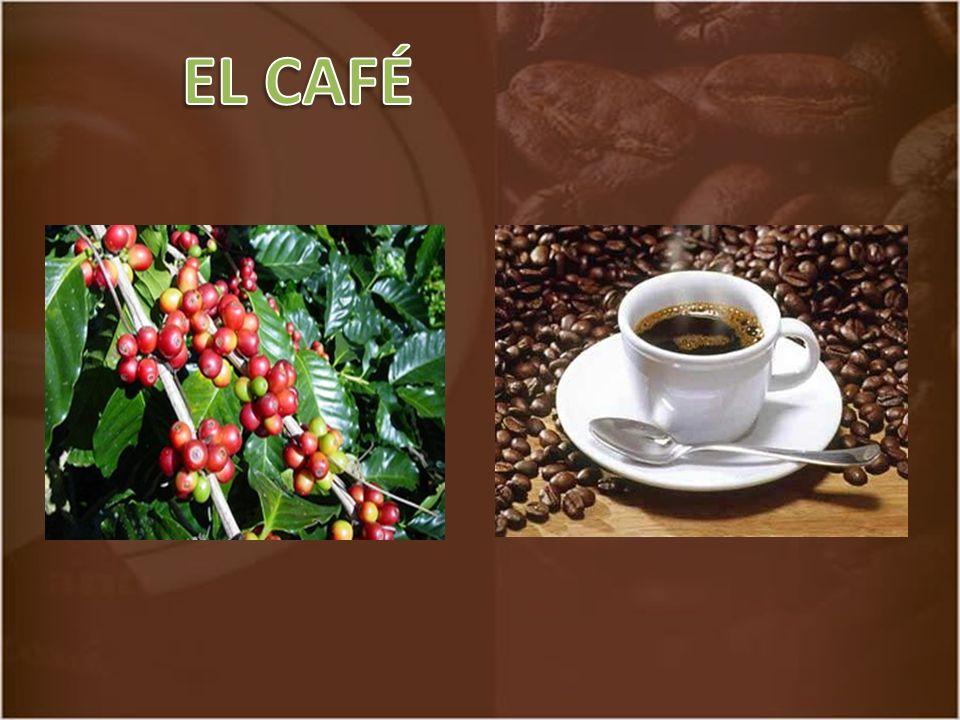 Café es la bebida que se obtiene de los frutos y semillas de la planta del café o cafeto (Cofeea) El café es la tercera bebida más consumida del mundo después del agua y el té.