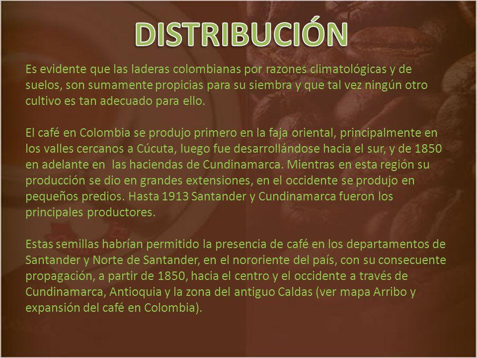 Es evidente que las laderas colombianas por razones climatológicas y de suelos, son sumamente propicias para su siembra y que tal vez ningún otro cultivo es tan adecuado para ello.