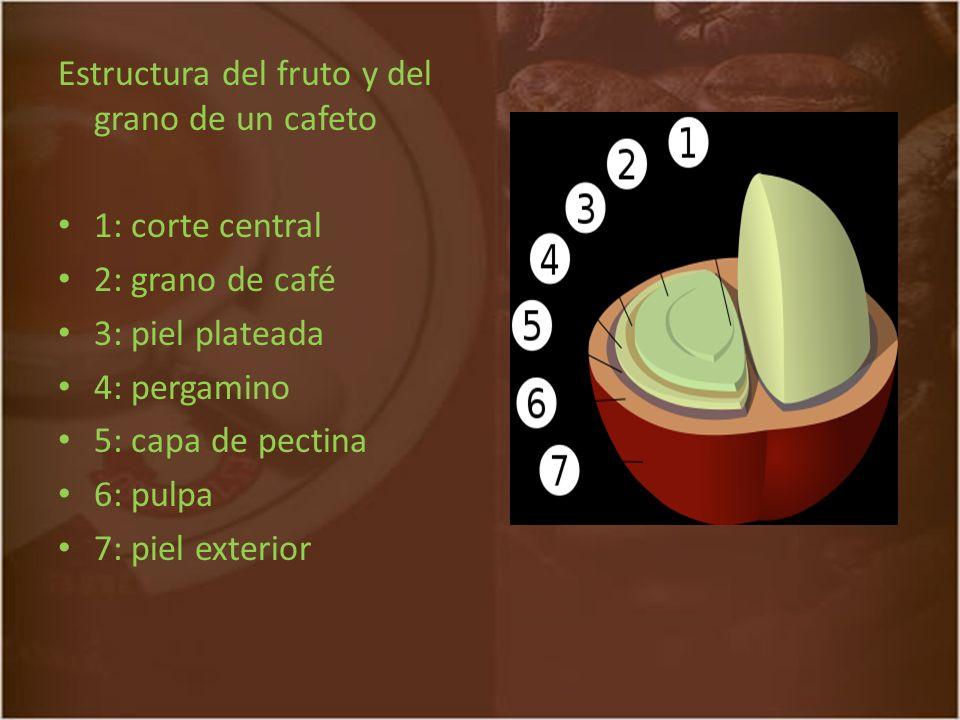 Los cafeteros colombianos se unieron con el fin de crear una institución que los representara nacional e internacionalmente y que velara por su bienestar y el mejoramiento de su calidad de vida.