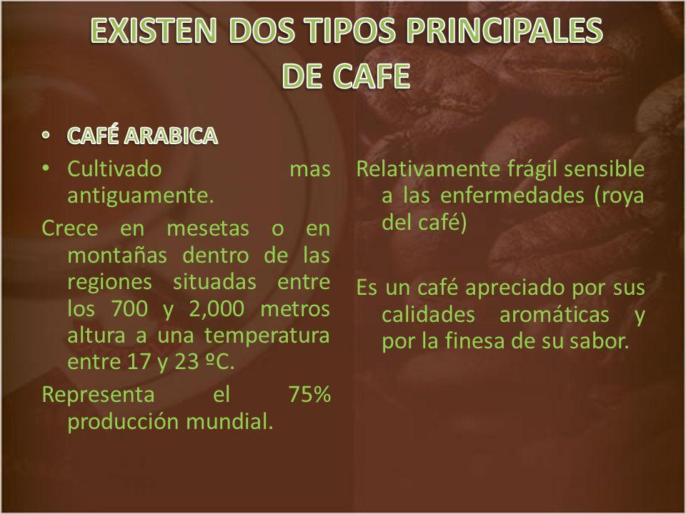 Relativamente frágil sensible a las enfermedades (roya del café) Es un café apreciado por sus calidades aromáticas y por la finesa de su sabor.
