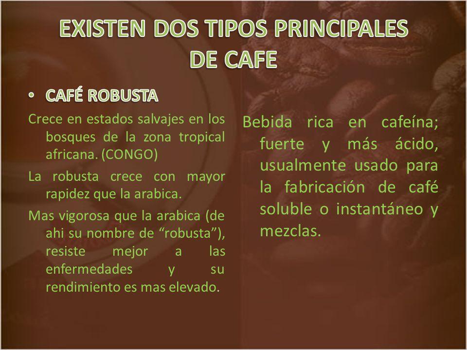 Bebida rica en cafeína; fuerte y más ácido, usualmente usado para la fabricación de café soluble o instantáneo y mezclas.