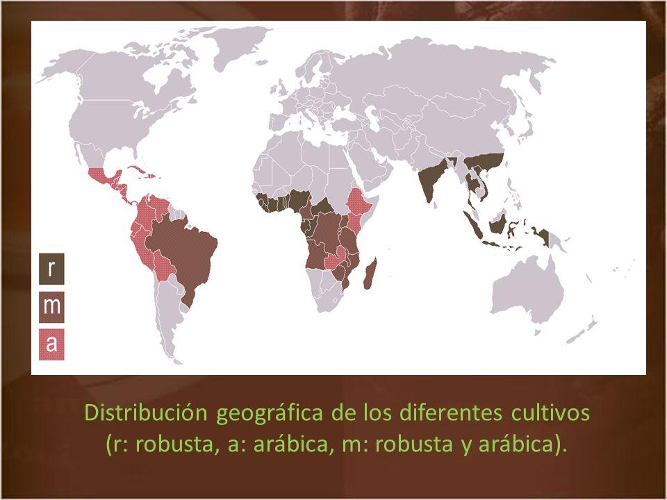 Distribución geográfica de los diferentes cultivos (r: robusta, a: arábica, m: robusta y arábica).