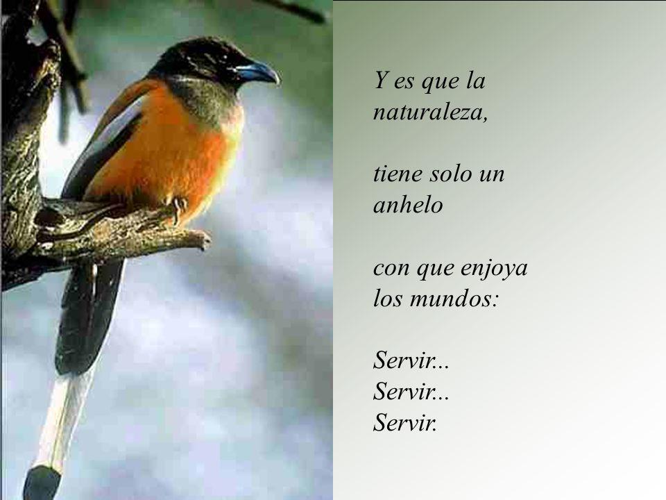 Y es que la naturaleza, tiene solo un anhelo con que enjoya los mundos: Servir... Servir.