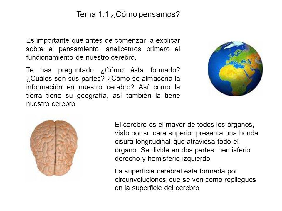 Tema 1.1 ¿Cómo pensamos? Es importante que antes de comenzar a explicar sobre el pensamiento, analicemos primero el funcionamiento de nuestro cerebro.