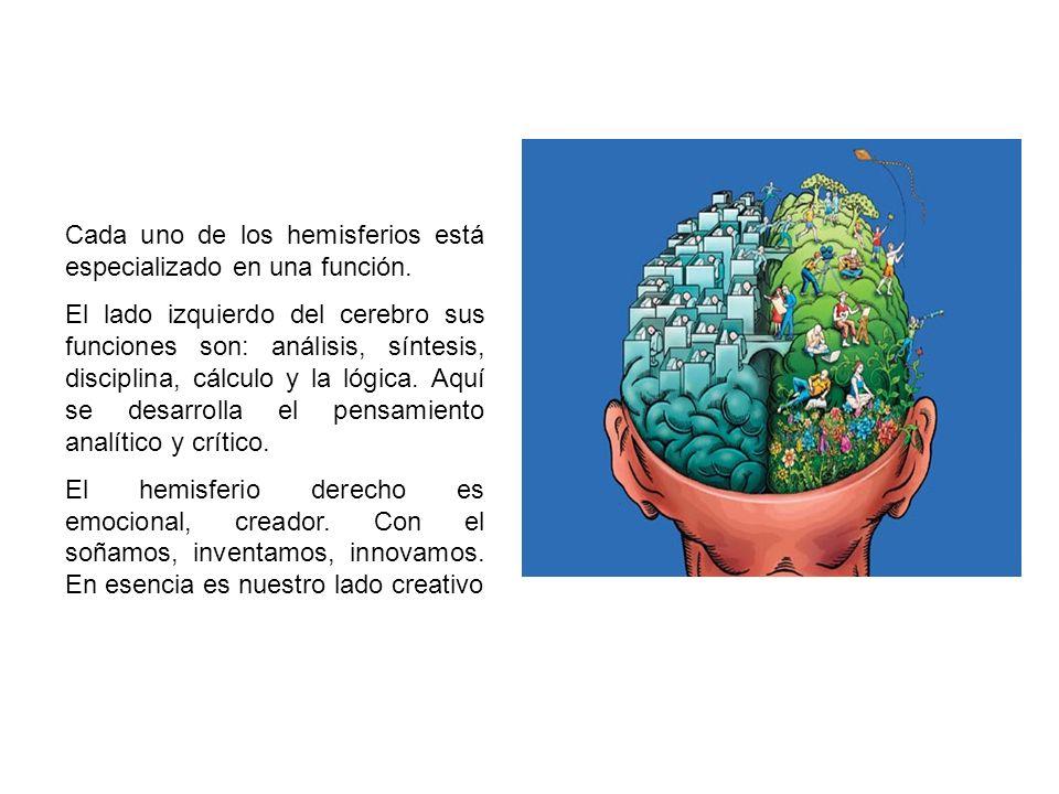Cada uno de los hemisferios está especializado en una función. El lado izquierdo del cerebro sus funciones son: análisis, síntesis, disciplina, cálcul