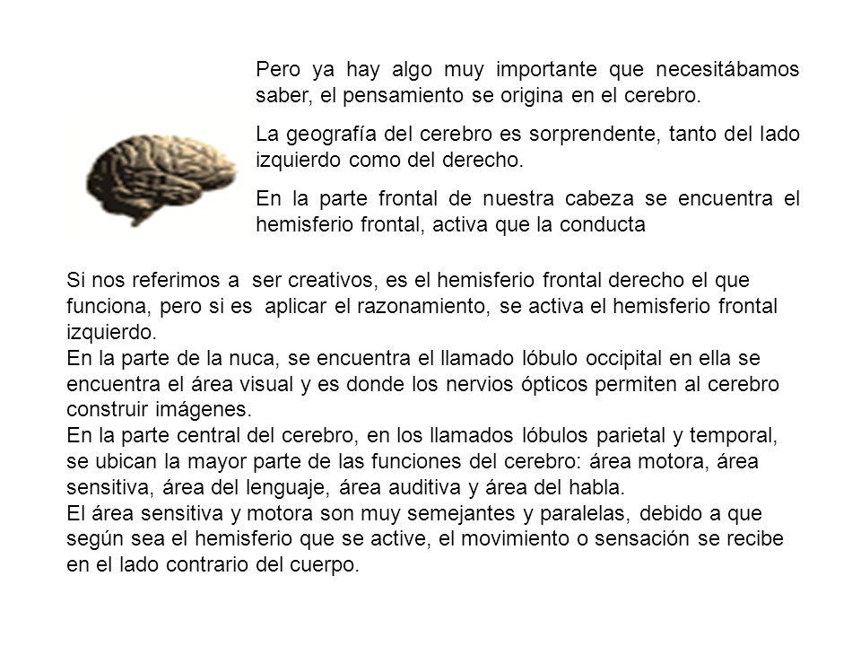 Pero ya hay algo muy importante que necesitábamos saber, el pensamiento se origina en el cerebro. La geografía del cerebro es sorprendente, tanto del