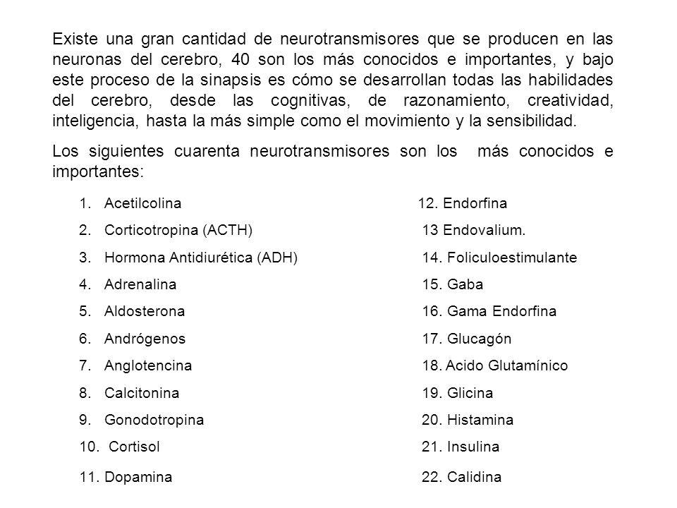 Existe una gran cantidad de neurotransmisores que se producen en las neuronas del cerebro, 40 son los más conocidos e importantes, y bajo este proceso