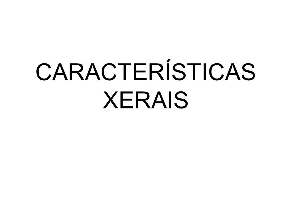 Características generales II Pentecostés Santo Domingo de Silos Alargamiento Del canon Antinaturalismo Expresionismo (Rasgos muy marcados) Isocefalia Rigidez, hieratismo