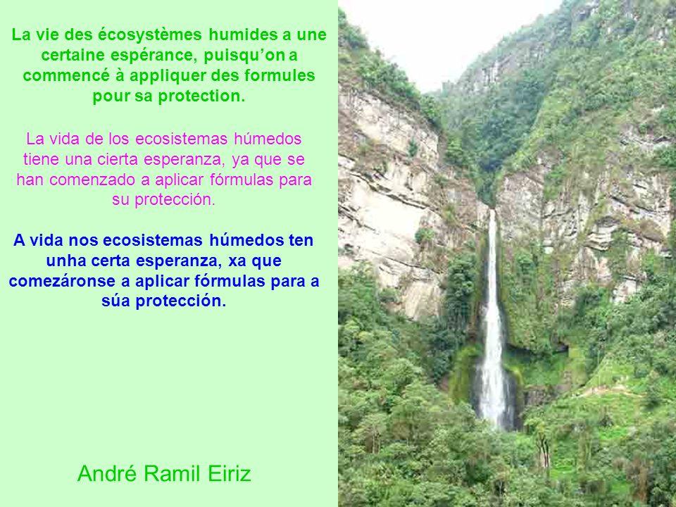 La vida de los ecosistemas húmedos tiene una cierta esperanza, ya que se han comenzado a aplicar fórmulas para su protección. A vida nos ecosistemas h