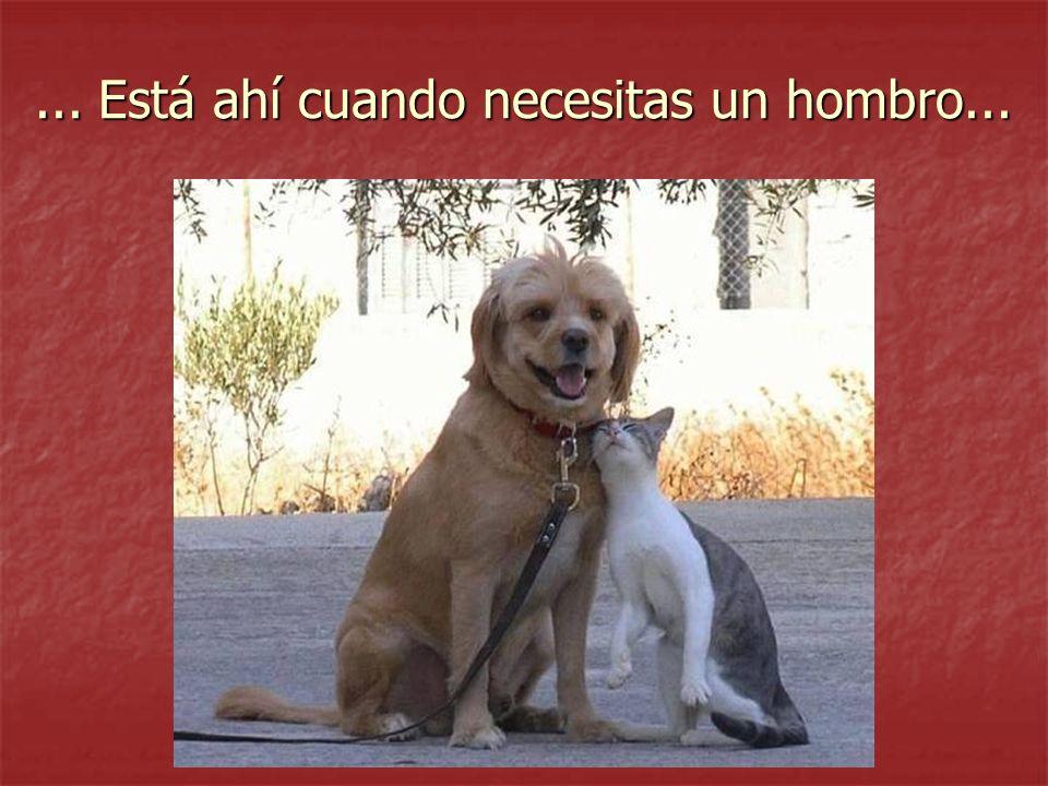 ... Cuando necesitas ser abrazado.