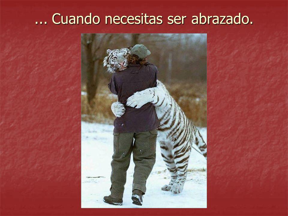 Debés saber que es difícil encontrar un buen amigo, Es difícil dejarlo perder, Es imposible olvidarlo.