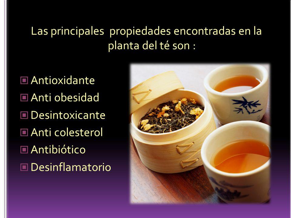 Las principales propiedades encontradas en la planta del té son : Antioxidante Anti obesidad Desintoxicante Anti colesterol Antibiótico Desinflamatori