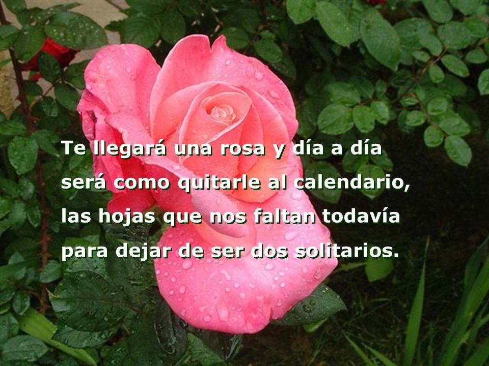 Te llegará una rosa y día a día será como quitarle al calendario, las hojas que nos faltan todavía para dejar de ser dos solitarios.