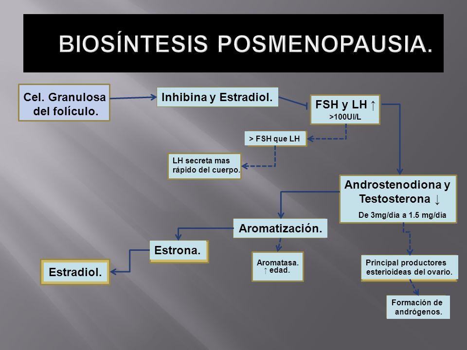 Cel. Granulosa del folículo. Inhibina y Estradiol. FSH y LH >100UI/L > FSH que LH LH secreta mas rápido del cuerpo. Androstenodiona y Testosterona De
