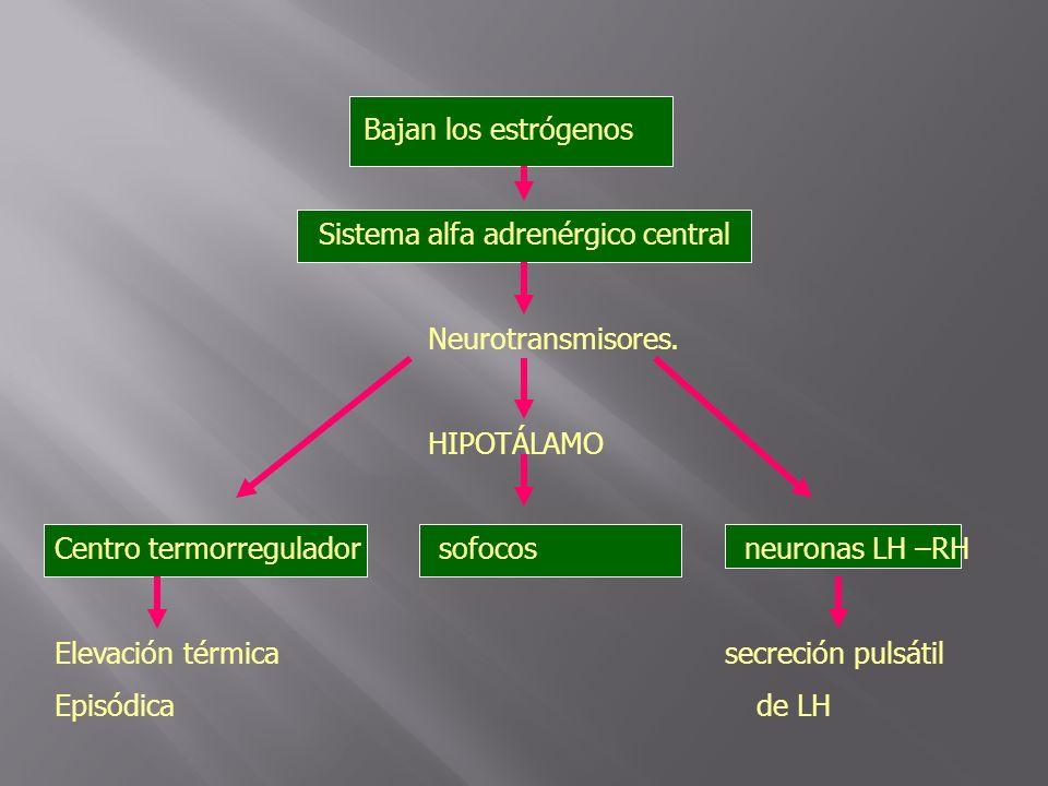 Bajan los estrógenos Sistema alfa adrenérgico central Neurotransmisores. HIPOTÁLAMO Centro termorregulador sofocos neuronas LH –RH Elevación térmica s