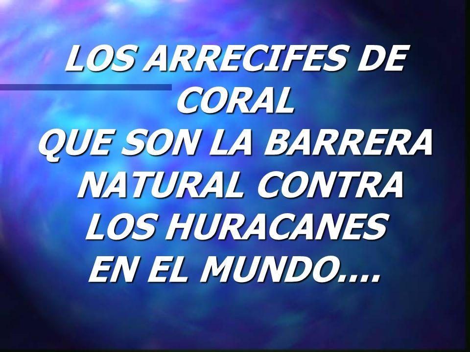 LOS ARRECIFES DE CORAL QUE SON LA BARRERA NATURAL CONTRA LOS HURACANES EN EL MUNDO....